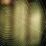 Применение паутины в медицине