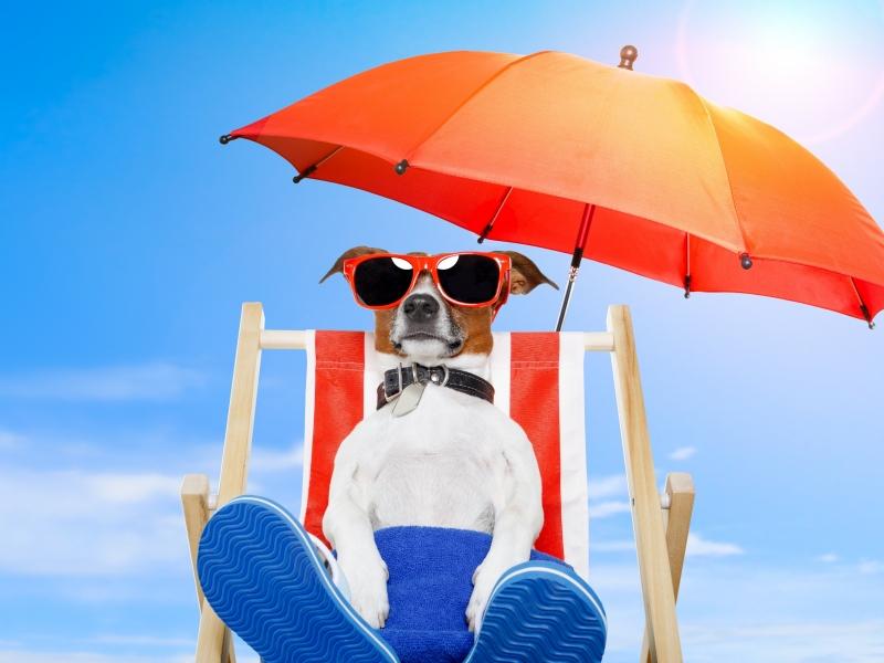 В Барселоне создали пляж для собак