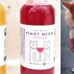 В США появилось вино для котов