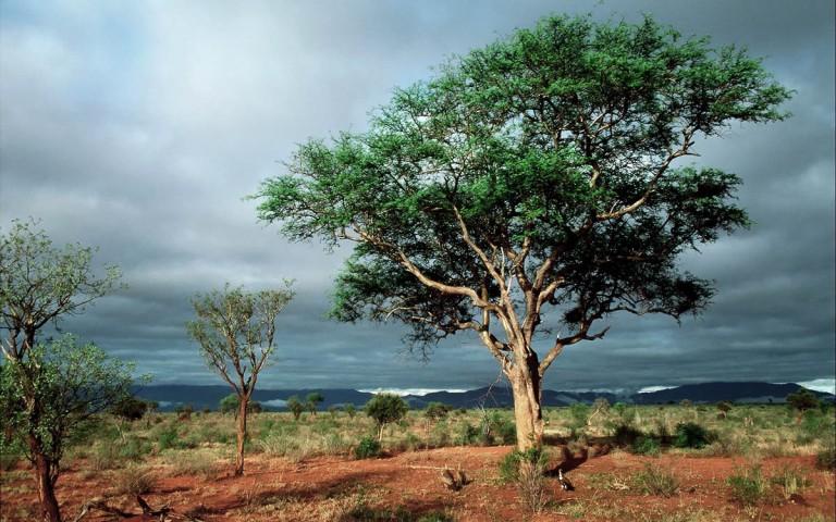 Национальный парк Крюгера - один из самых старейших парков в мире