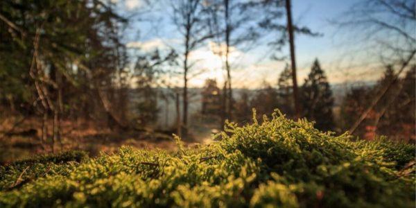 ТОП10 лучших статей за октябрь