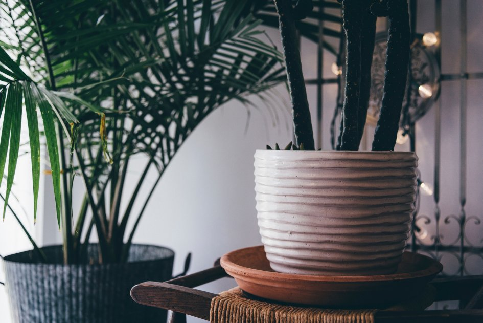 5 комнатных растений, которые вырабатывают больше всего кислорода