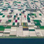 Плантации тюльпанов в потрясающих фотографиях Бернхарда Ланга