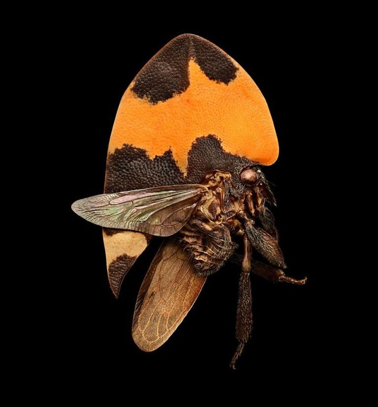 Микроскульптура: Левон Бисс показал удивительные фотографии насекомых под микроскопом