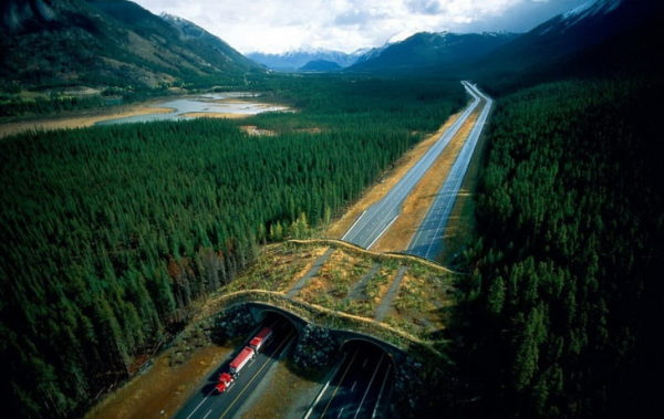 Мосты, которые помогают животным безопасно пересекать автомагистрали