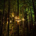 Redwood Nightlights — уникальная конструкция для ночных прогулок по лесу
