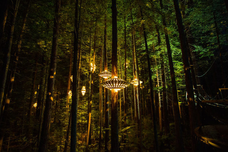 Redwood Nightlights - уникальная конструкция для ночных прогулок по лесу