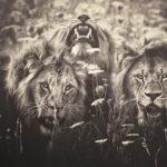 Удивительные фотографии диких животных в серии «Африканские души» от Мануэлы Кульпа