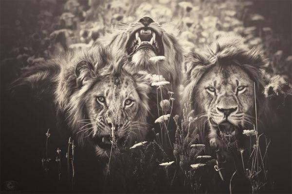 """Удивительные фотографии диких животных в серии """"Африканские души"""" от Мануэлы Кульпа"""