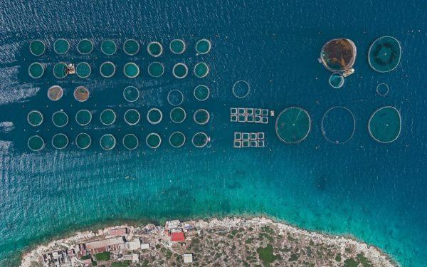 Фотограф Бернхард Ланг представил серию фотографий «Рыбные фермы»