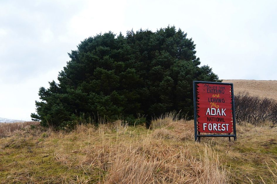 Самый маленький «Национальный лес» в Адаке