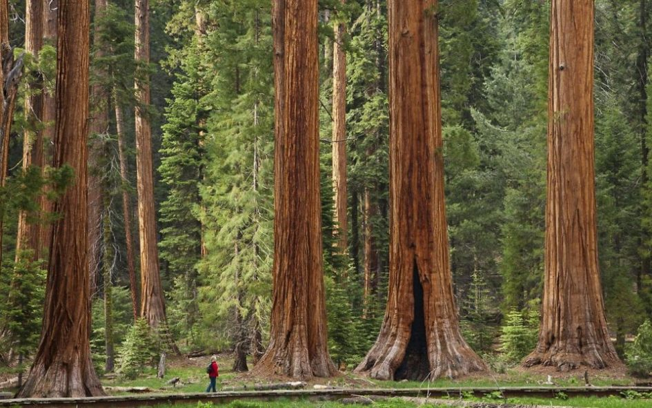 Национальный парк Секвойя - место с огромными деревьями