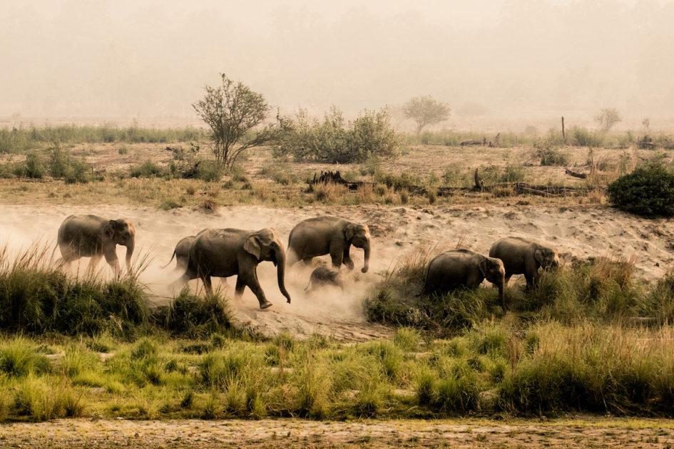 Национальный парк Джим Корбетт - старейший парк Индии