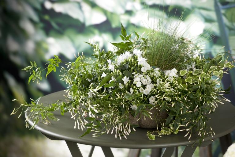 7 растений, которые помогут вам выспаться