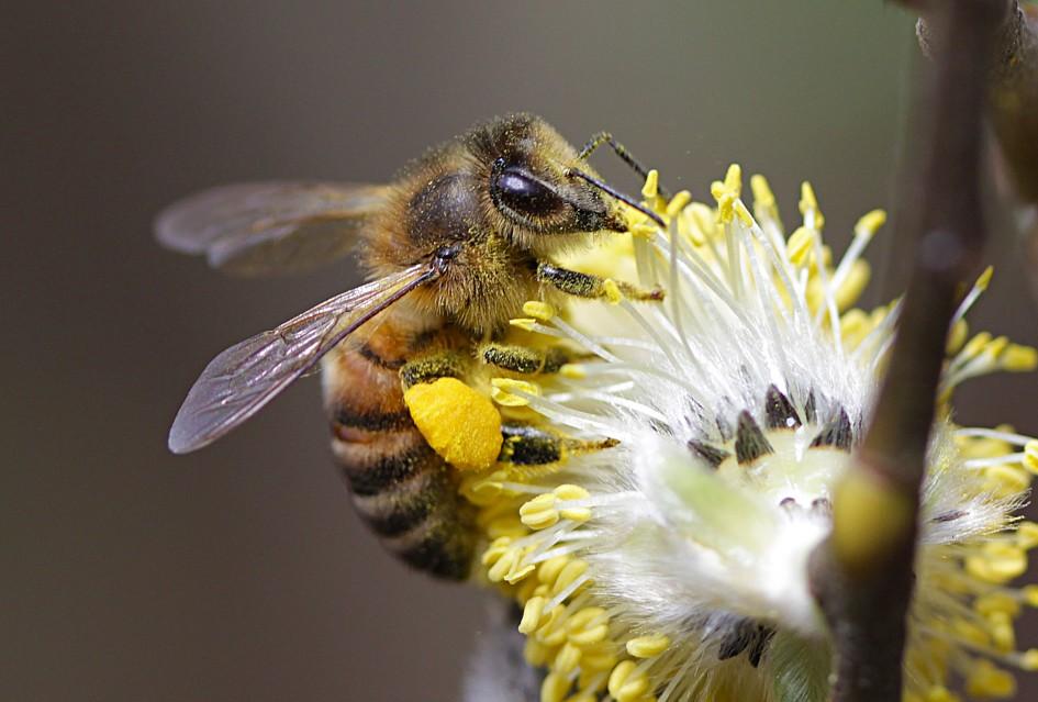 интересные картинки про пчел большой
