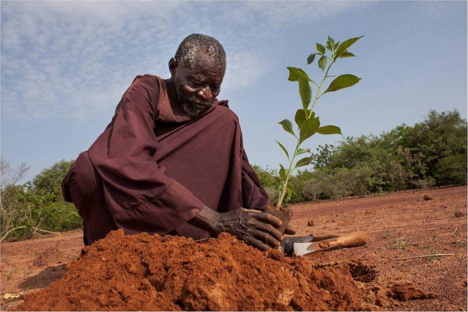 Якуб Савадого - человек, вернувший растительность в пустыне