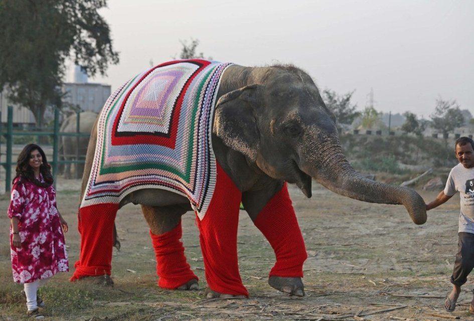 В Индии пошили свитера для слонов