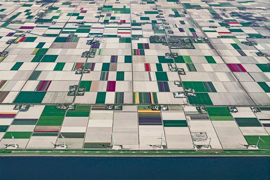 Фотографии плантаций тюльпанов в фотографиях Бернхарда Ланга