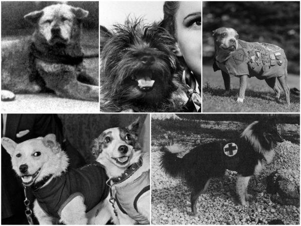 5 собак, которые стали знамениты на весь мир
