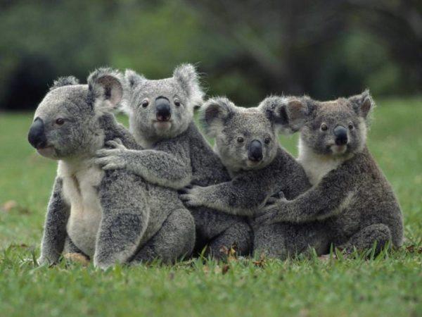 10 самых медленных животных