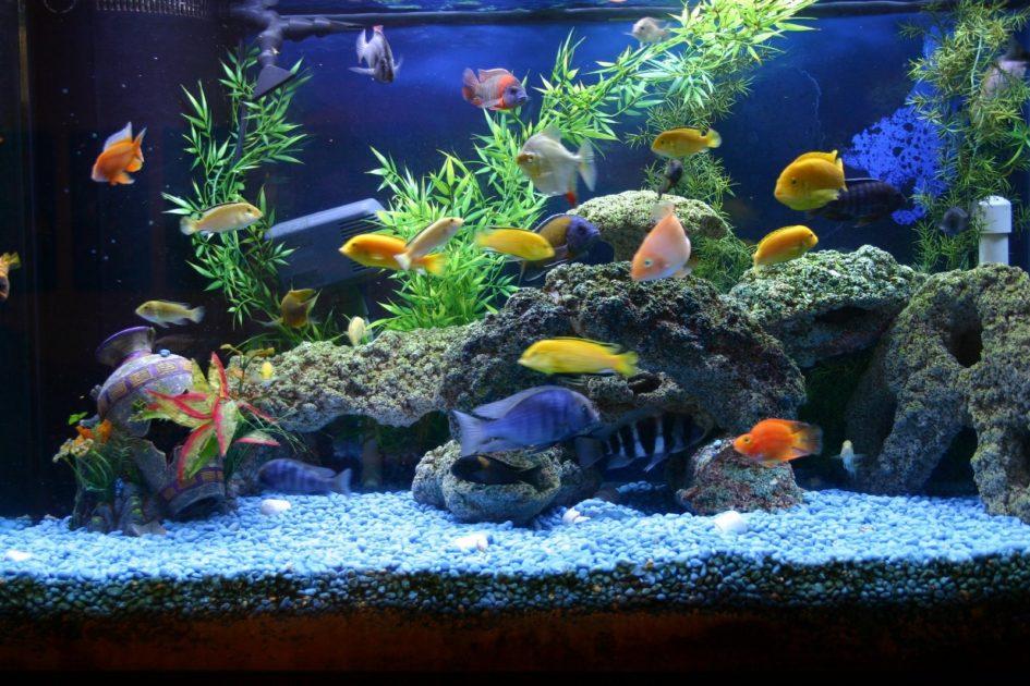Нужна ли химия в аквариуме