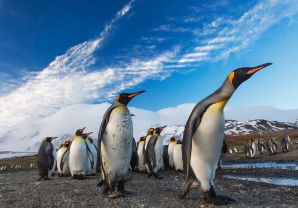 7 мест где посмотреть на пингвинов