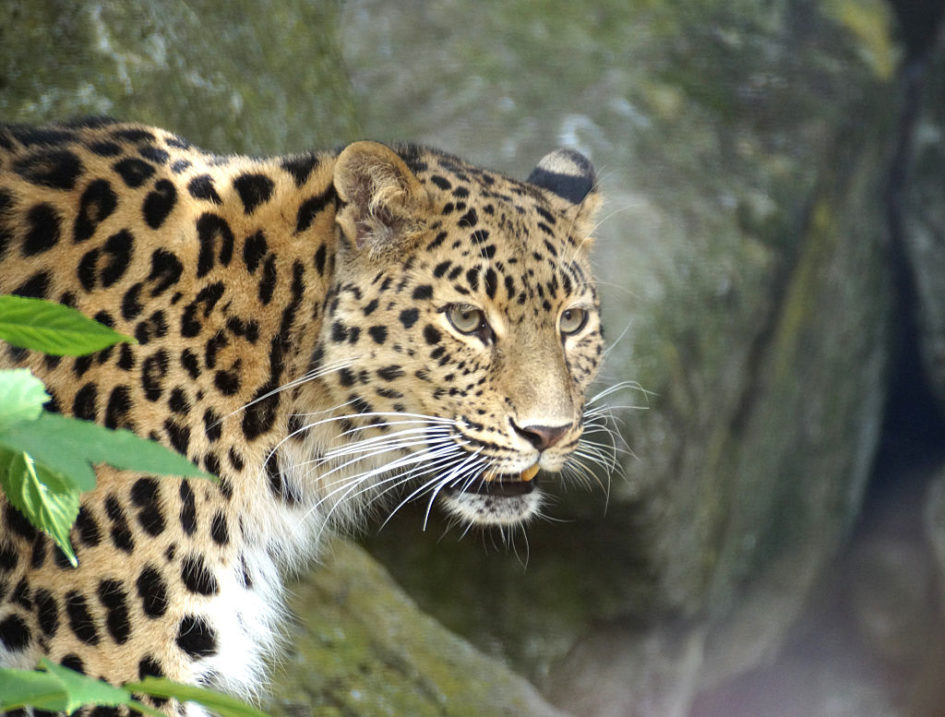 5 самых редких животных в мире