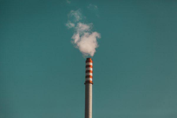 5 продуктов, производство которых убивает нашу планету
