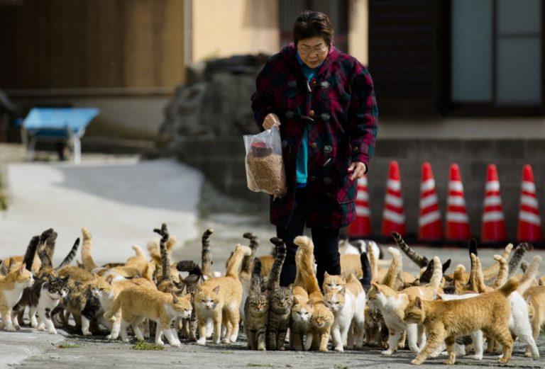 Тасиро - японский остров кошек