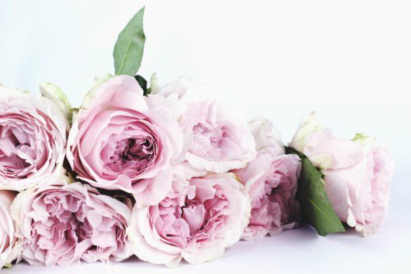 Какие розы подарить — выбираем букет к празднику и не только