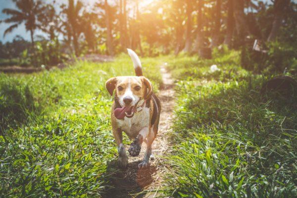 7 популярных мифов о собаках