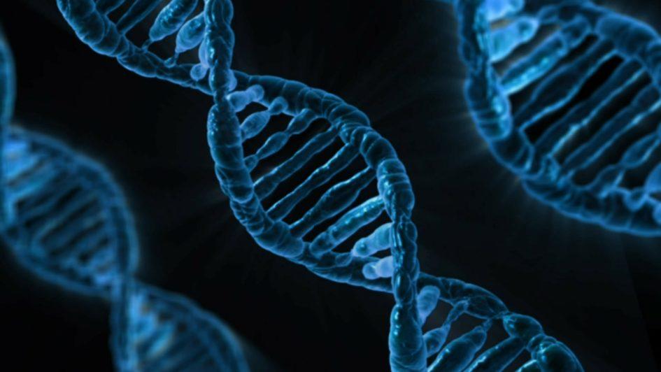 Что формируют гены