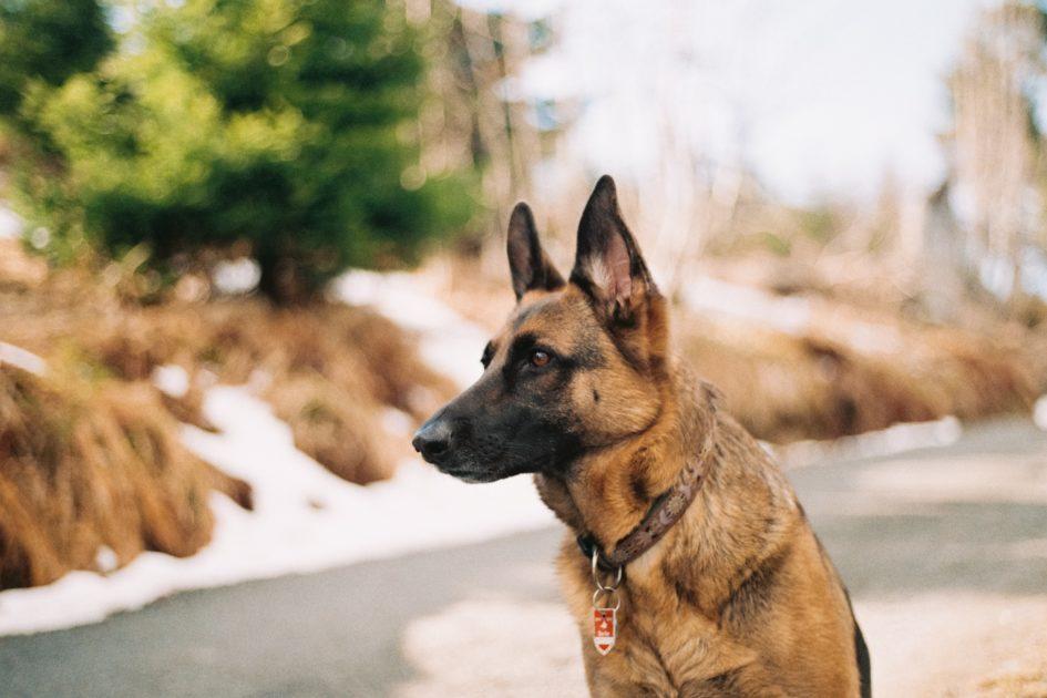 5 мифов о кинологических собаках