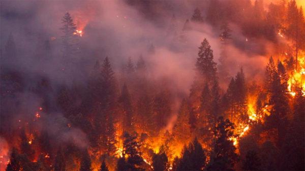 7 самых крупных лесных пожаров в истории