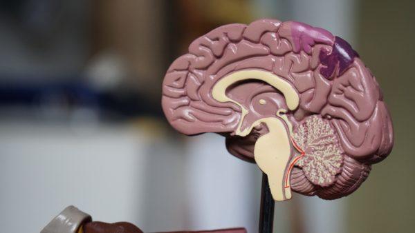 5 способов профилактики болезни Альцгеймера