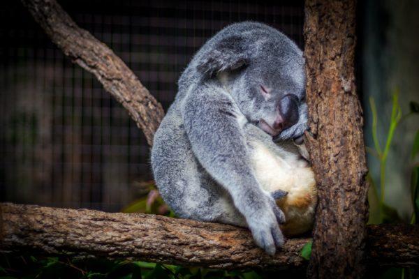 5 веских причин вздремнуть прямо сейчас