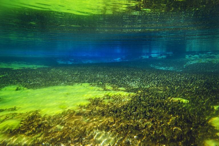 Синее озеро Нельсон - самое чистое озеро в мире