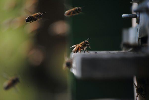 5 странных эффектов от укусов насекомых