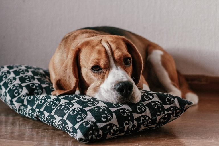 10 пород собак, которые живут дольше всех