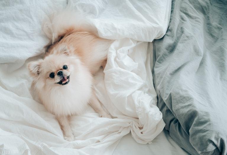 10 пород собак для маленькой квартиры