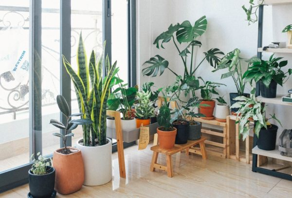 10 комнатных растений, эффективно очищающих воздух в помещении